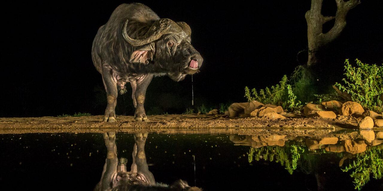 Umgodi  Overnight hide – Zimanga
